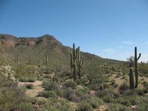 desert-417039_1280