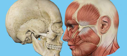 The Masticatory System: It's Role in Occlusal Risk Analysis